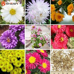 Semillas de aster online-9 colores disponibles semillas de Callistephus chinensis balcón planta de bonsái en maceta Semillas de flores semillas de aster un paquete / 100 piezas