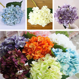 Promotion Fleurs De Jardin D\'automne | Vente Fleurs De Jardin D ...