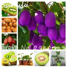 Wholesale tree pots wholesale - Big Promotion! 200 Pcs Kiwi Seeds Organic Delicious Fruit Vegetable Melon Seed Planted Potted Plants Trees Home Free Shipping Easy Grow