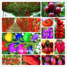 Wholesale Rainbow Garden - Cheap 200 Pieces Rainbow Tomato seeds, bonsai organic vegetable & fruit seeds,potted plant for home &garden free shipping