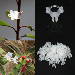 2019 fiori di verdure Innesto Clips100Pcs / lot plastica resistente di alta qualità trasparente per giardino vegetale fiore cespugli di vite pianta innesto monitoraggio sconti fiori di verdure