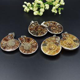 ammonit anhänger großhandel Rabatt Natürlicher Ammonit-Fossilstein, der Anhänger 28-40mm poliert