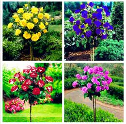 Decorazione del vaso del fiore online-200 pz / borsa misto albero di rose, semi di rosa bonsai semi di fiori semi esotici giardino decor pianta in vaso per la casa giardino