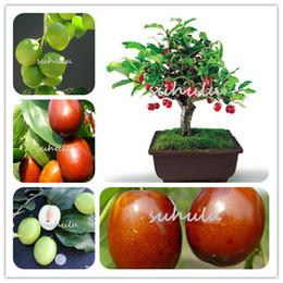 Wholesale Jujube Wholesale - 10 Pcs Bag Ziziphus Jujube Seeds Very Sweet Healthy Organic Red Jujube Seeds Plant Bonsai Fruit Seeds For Kids Diy Home Garden Plant
