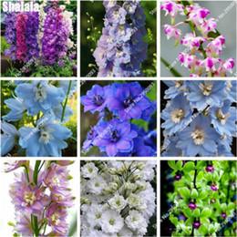Piantagioni per orchidee online-100 Pz Cinese Economici Semi di Dendrobium In Vaso Fiore di Casa Bonsai Rare Semi di Orchidea Colori Misti Balcone Vasi di Fiori Fioriera
