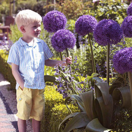 Semi di piante ornamentali online-100pcs Purple Giant Allium Giganteum Beautiful Flower Seeds Giardino pianta regalo fiori-seme ornamentale-pianta