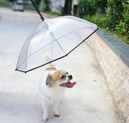 vente en gros de fournitures pour animaux de compagnie utiles utiles parapluie transparent pour animaux de compagnie PE ? partir de fabricateur