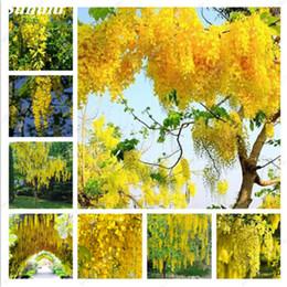 Piante da giardino viola online-Golden Yellow Wisteria Seeds 20 Pz Rare Purple Bonsai Glicine Indoor Piante ornamentali perenni Giardino perenne