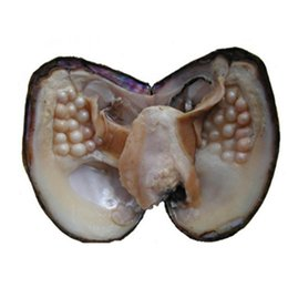 Wholesale Fresh Cultured Pearls - Big Oyster Pearl eight years 2018 aquaculture 20-30 pcs Pearl Individually Vacuum Packed Cultured Fresh Oyster pearl wholesale Free Shipping