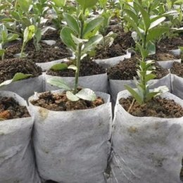 Wholesale Floor Supplies - Lot Nursery Pots Plant-fiber Seedling-Raising Bags Garden Supplies seeding grow bag