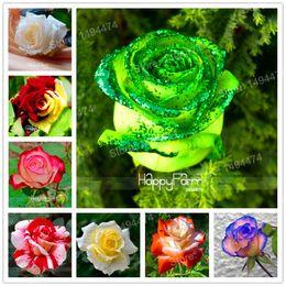 Vendita calda! Semi di semi di rose 200 semi rari misti Fiori di semi di bonsai di fiori rosa profumati belli e profumati facili da piantare da