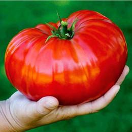 2019 giants taschen 100 teile / beutel Rindfleisch Hybrid giant tomatensamen, Extra-fleischig, Extra-lecker Tomaten bio-lebensmittel samen gemüse bonsai topfpflanze günstig giants taschen