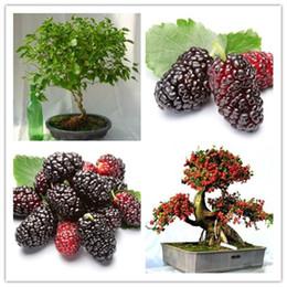 50 pz / borsa semi di gelso nero, semi dell'albero di gelso, semi di frutta verdura Heirloom organico, dolce e heathy, per giardino di casa da
