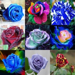 Wholesale Rose Garden Colors - New Varieties 10 Colors Rose Flower Seeds 100 Seeds Per Package Flower Seeds For Home Garden Plants