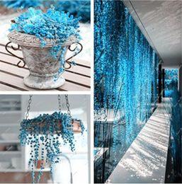 Wholesale Plants Office - blue Pearl Chlorophytum Seeds Potted Plant Succulent Seeds Anti Radiation Particles 100 pcs bag office desktop flowers