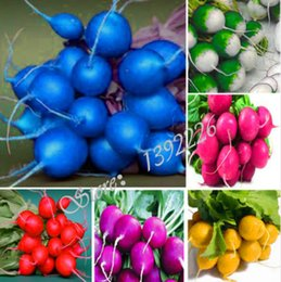 Wholesale Real Fruits - 200 Pcs Rainbow Colour Cherry Belle Radish Seeds 100% Real Delicious Fruit Vegetable Seeds Home Garden Plant Free Shipping
