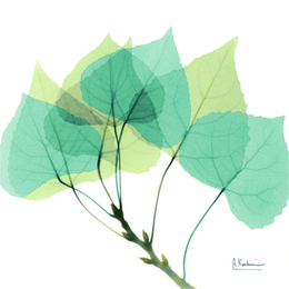 Wholesale Paint Definition - leaf wall art.Botanical art.Botanical prints wall art. Green leaf art Home Wall Decoration.High Definition Picture Photo
