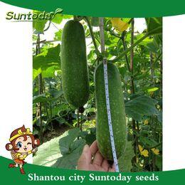 Semillas de invierno online-Suntoday calabaza de la cera melón de invierno Benincasa Hispida Chieh-qua Vegetable Seeds asiática jardín de plantas de la herencia no-GMO Híbridos semillas orgánicas frescas