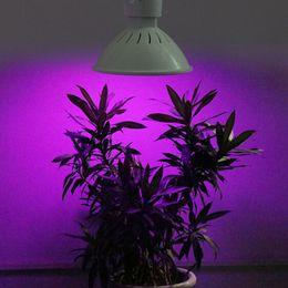 12w ha portato a crescere la lampadina Sconti Nuovo AC 85-265V Leds Grow Light E27 200 LED 12 W Coltiva la lampadina da giardino Lampada da giardino Indoor Hydroponics Serra led cultivo T2