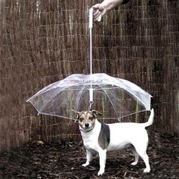 Utile transparent PE Parapluie pour animaux de compagnie, petit chien, parapluie, équipement de pluie avec chien, garde l'animal au sec, à l'aise sous la pluie ? partir de fabricateur