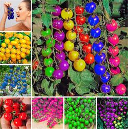 Tomaten obst gemüse online-50 Stücke Bunte Kirschtomate Samen Balkon Regenbogen Süße Obst und Gemüse Samen Topf Bonsai Topfpflanze Tomatensamen Freies Verschiffen