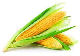 2019 frutta di mais Super-Sweet Fruit Corn Seed Coltivazione Sweet Waxy High-Yielding Species Può essere mangiato semi di mais crudo 20 semi frutta di mais economici