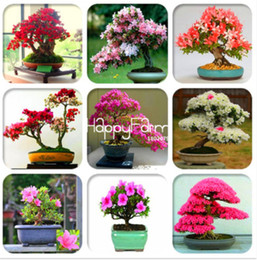 100% genuino! 30 Pz Cherry Blossoms Giapponese Sakura Seeds Perenne Come Azalea Flower Seed Facile Grow Per La Casa Giardino In Bonsai Così Bellezza da