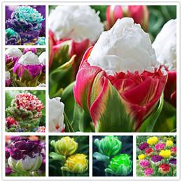 Canada 30 graines de tulipe de PCS, plantes de tulipe d'arome, crème glacée rare, jardinières de pot de fleur, bricolage pour la maison et le jardin, usines de bonsaïs pour la décoration Offre