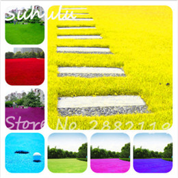 Wholesale Growing Perennials - 500 Pcs Rare Color Japanese Forest Turfgrass Grass Seeds, Perennial Evergreen Lawn Seeds, Beautiful Garden Ornamental Plant, Easy to Grow