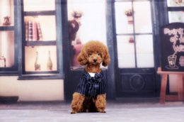 Wholesale Teddy Bear Winter - Fake two dog clothes spring and autumn striped suit top teddy bear two-legged suit pet clothes gentleman style