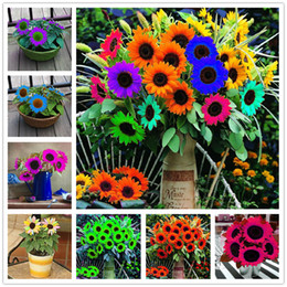 Wholesale Sunflower Seeds Wholesale - New Arrival 2018!!! 100 Pcs Mini Multi-colored Dwarf Sunflower Seeds Perennial Flower Seeds For Home Garden Decor DIY Potted Plant