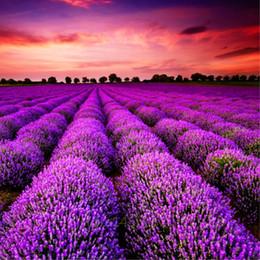 2019 piante da giardino fragranti Provenza semi di lavanda viola lavanda semi di vaniglia profumati semi di lavanda biologici fiore pianta casa giardino bonsai 50 pz / borsa piante da giardino fragranti economici