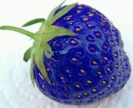 Bonsai blu online-I più nuovi semi di frutta Blue Strawberry Seeds Giardino fai da te Semi di ortaggi Piante in vaso Vasi Forniture da giardino Spedizione gratuita Bonsai Balcone esotico