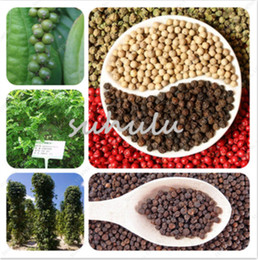 Wholesale Growing Garden Vegetables - Worlds Rare Good Tasty Black Pepper Seeds Easy Growing Home Garden Bonsai Non-Gmo Vegetable Seeds Rare Tasty For Kitchen 100 Pcs Bag