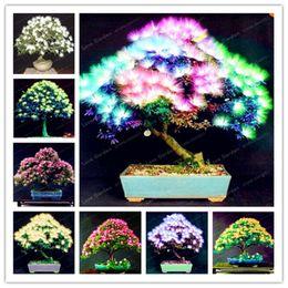 Spedizione gratuita bonsai semi di albizzia 20 pz / borsa misto cimelio semi di fiori albero di acacia arbusto pianta in vaso splendido fiore profumato da