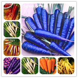 Wholesale Planting Fruit Seeds - 50 Seeds Pack Colorful Carrot Seed Blue Yellow Radish Seeds Vegetables Plants Garden Men Loseweight Healthy Fruit And Vegetable Food Seed