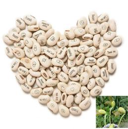 20 шт. магия растет сообщение бобы семена магия Bean английский магия Bean бонсай Зеленый офис украшения дома редкий подарок завод от