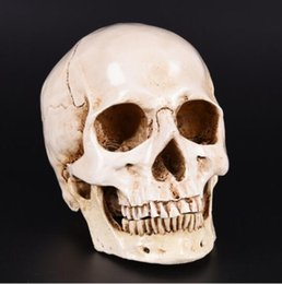 Wholesale Models Crafts - Human Head Resin Replica Medical Model Lifesize 1:1 Halloween Home Decoration High Quality Decorative Craft Skull
