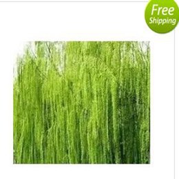 Wholesale Willow Trees - 500pcs a set green color light willow tree seed prodgf hidgf whydgf kaolal weibog kfsee ngryise dwarfgiantfarm