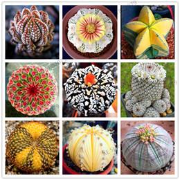 Semi coperti online-200 Rare Mix Lithops Semi Living Stones Cactus Succulente Organic Garden Bulk Seed, semi di bonsai per piante grasse al coperto