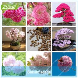Più economico 20 pezzi giapponese colorato Sakura Seeds Bonsai Fiore Cherry Blossoms Cherry Tree pianta ornamentale da