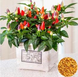 sementes ornamentais de pimenta Desconto 100 pcs sementes de Pimenta Pimenta sementes Multi cor, Comestíveis Ornamental, Mini Jardim Casa Planta sementes de hortaliças Frete Grátis