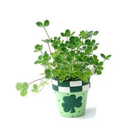 Bonsai indoor online-Semi di trifoglio, piccoli fiori al coperto quattro semi di trifoglio di foglie, piante di bonsai trifoglio fortunato 100 particelle / sacchetto