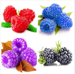 Wholesale grow purple - 300 Pcs Rare Raspberry Seeds Organic Delicious Fruit Seeds Green Red Blue Purple Black Raspberry Seeds For Home Garden Plant Easy To Grow