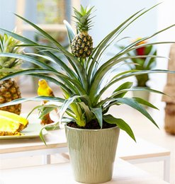 Wholesale Garden Products - 2018 New Product Pineapple Seeds 100 Pcs Bag Dwarf Pineapple Plant Tree Fruit Rare Bonsai Plants Seed For Home Garden Decoration