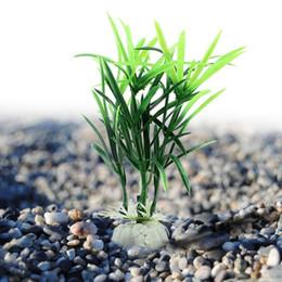 Rabatt Glucklicher Bambus 2019 Gluckliche Bambuspflanzen Im