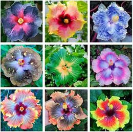 синенсис Скидка 100 шт. гигантский гибискус семена 24kinds гибискус Роза-sinensis семена цветов смешать цвет гибискус семена деревьев для цветочных горшечных растений