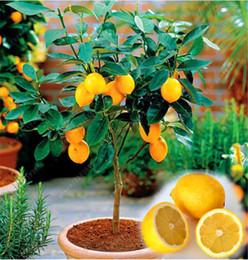 Wholesale fresh fruits vegetables - 50 PCS Rare Natural Sweet Yellow Lemon Tree Seeds Edible Indoor Outdoor Heirloom Fresh Fruits Vegetables Plant Seed For Diy Home & Garden
