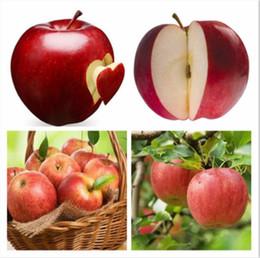 2019 jardines de manzanas 30 pcs Bonsai Apple Tree Seeds árbol de bonsai de frutas raras-- jardín de semillas de manzana roja deliciosa para jardineras de macetas jardines de manzanas baratos