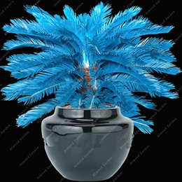 Wholesale Watch Rare - 100 pcs Rare Real Blue Tropical Plants Palm Seeds Bonsai Four Seasons Watch Beautiful Gardens in Excellent Tree Species